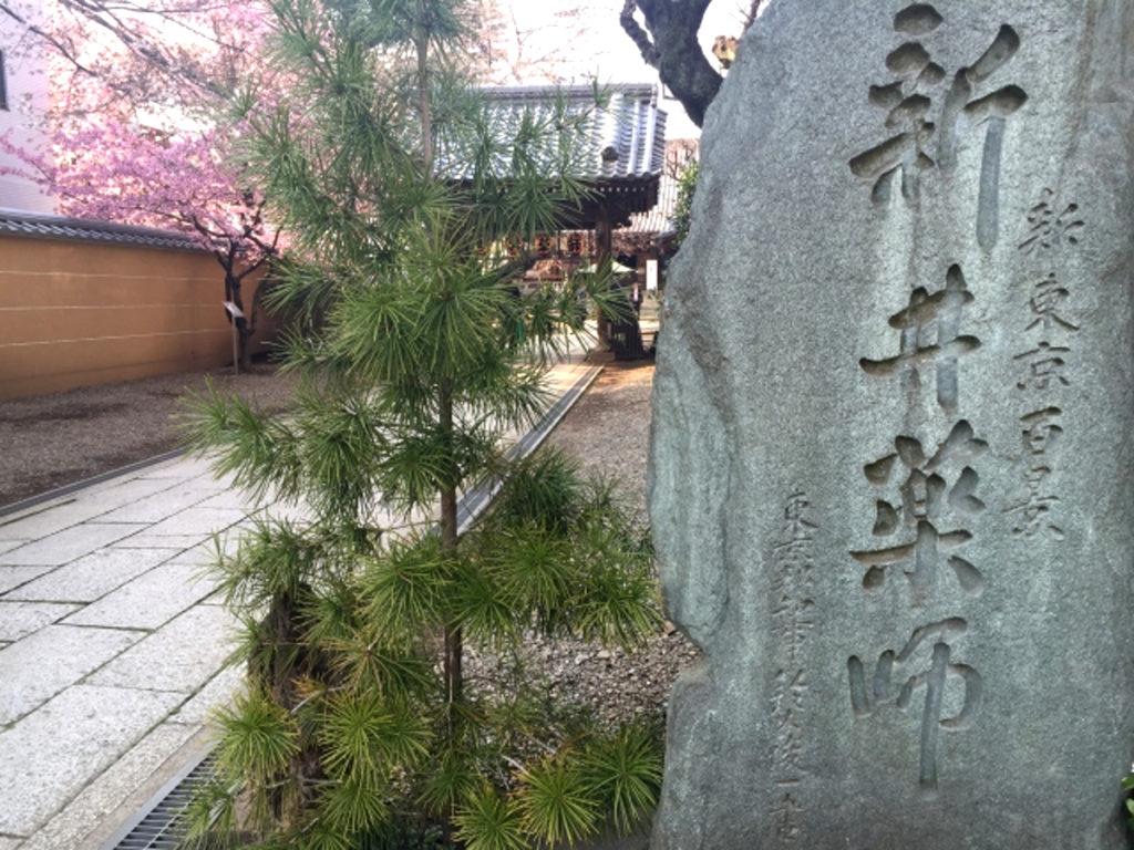 新井薬師桜画像