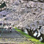 京都・蹴上インクラインの桜の開花時期やアクセス・駐車場情報を紹介