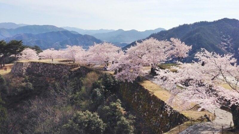 竹田城跡_桜