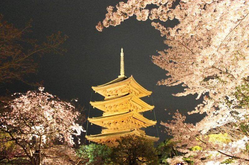 東寺_桜ライトアップ