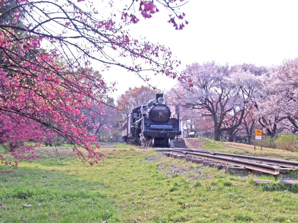 小金井公園桜画像