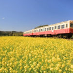 小湊鉄道で春の千葉房総へ!菜の花畑の時期や撮影・観光スポットも紹介