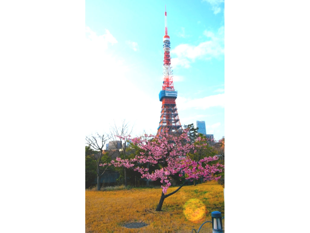 東京タワー桜画像