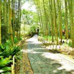 修善寺『竹林の小径』のライトアップ時間やアクセス・駐車場情報