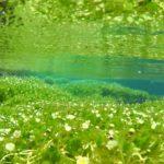 琵琶湖/湖北エリアのおすすめ観光先『醒井宿』で梅花藻と清流を楽しむ