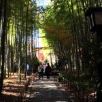 修善寺『竹林の小径』はライトアップもされる心落ち着く観光スポット