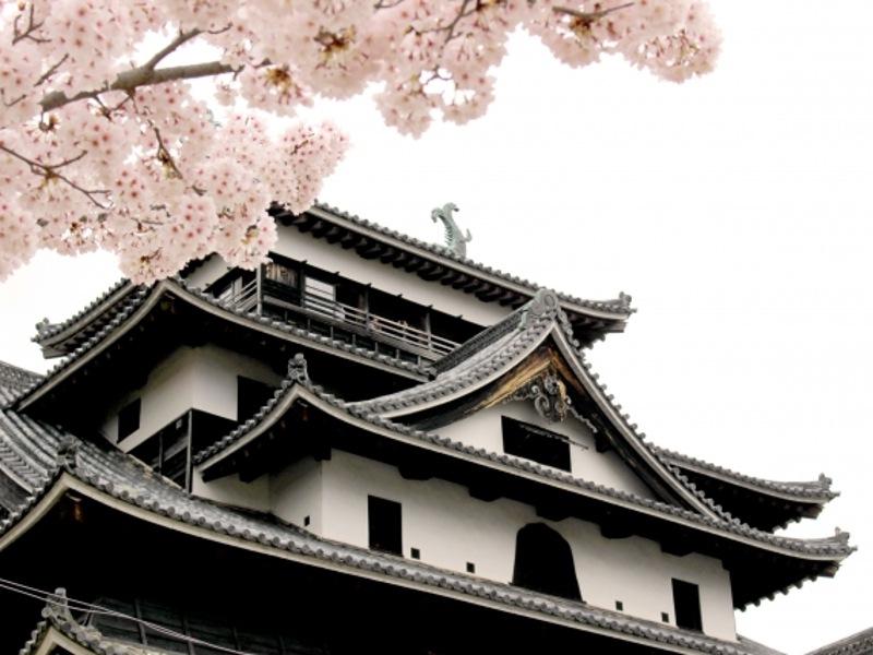 松江城と桜画像