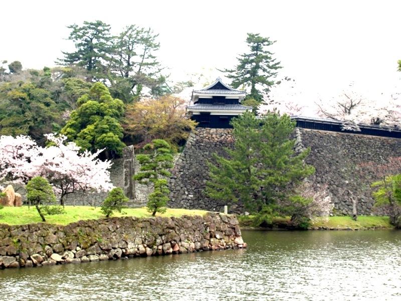 松江城と桜画像2