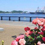 ヴェルニー公園のバラの見頃やアクセス・駐車場・イベント情報を紹介