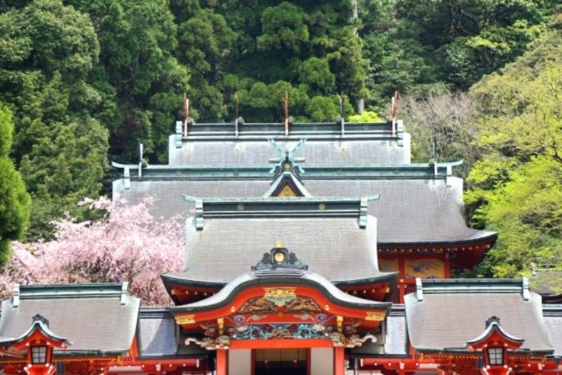 霧島神宮_社殿(桜)