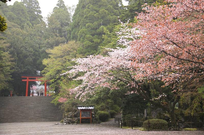 霧島神宮_社殿(桜)_001