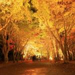 香雪園の紅葉はライトアップも美しい!バスでも車でもアクセスしやすい名勝
