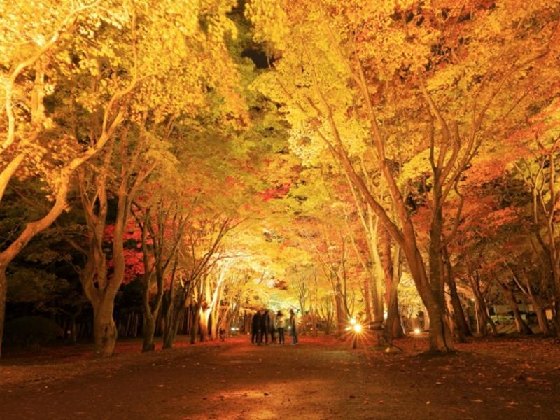 香雪園ライトアップ画像