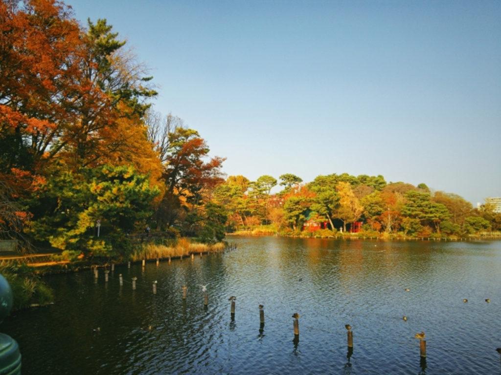 洗足池公園の秋画像