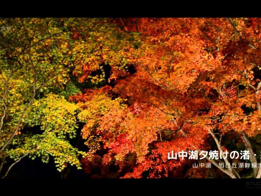 旭日丘湖畔緑地公園(山梨) | 2018年紅葉ライトアップ情報