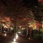 修善寺 虹の郷(静岡) | 2019年紅葉ライトアップ・見頃情報