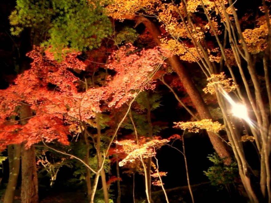 松雲山荘(新潟) 紅葉ライトアップ・見頃情報