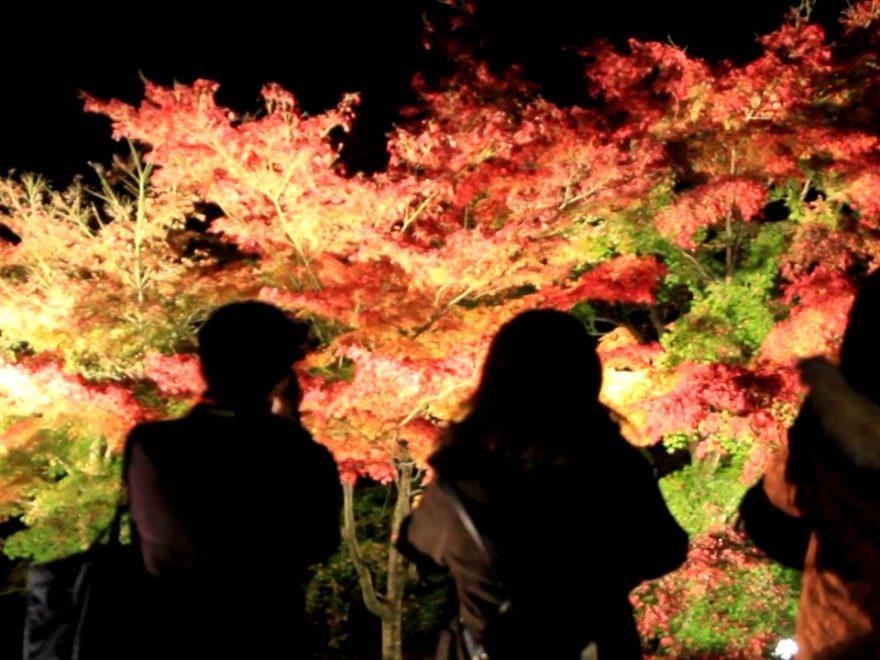 知恩院(京都) | 2018年紅葉ライトアップ情報