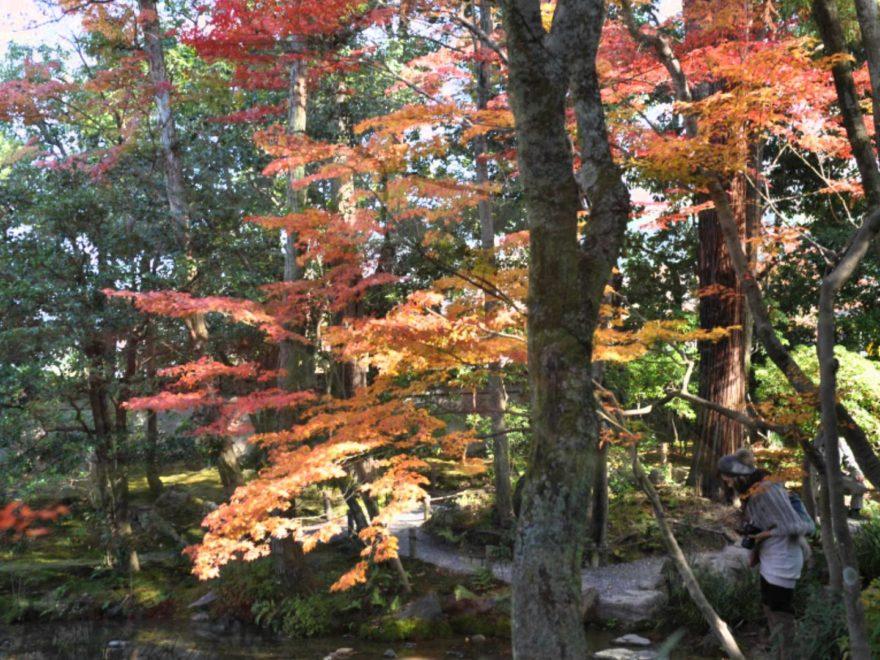 無鄰菴(むりんあん)(京都) | 2018年紅葉ライトアップ情報
