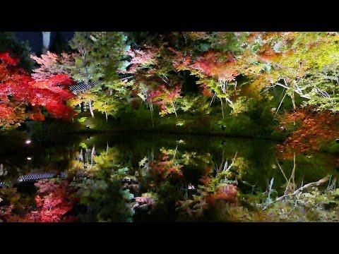 高台寺・圓徳院(京都) | 2018年紅葉ライトアップ情報