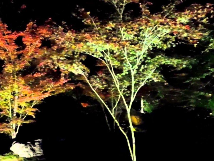 毘沙門堂 勝林寺(京都) | 2018年紅葉ライトアップ情報