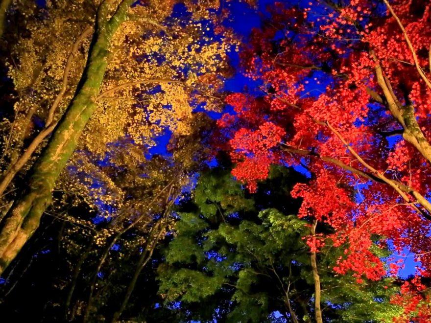 京都府立笠置山自然公園・笠置寺(京都) | 2018年紅葉ライトアップ情報