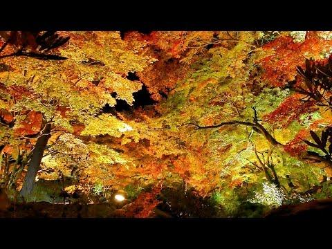 宝厳院(京都) | 2018年紅葉ライトアップ情報