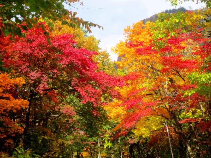 層雲峡温泉 紅葉谷(北海道) | 2018年紅葉ライトアップ情報