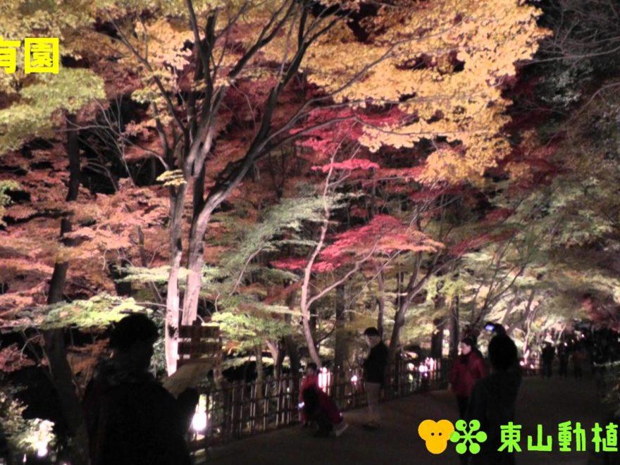 東山動植物園(愛知) | 2018年紅葉ライトアップ情報