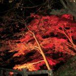 【中止】弘前公園(青森) | 2020年紅葉ライトアップ・見頃情報