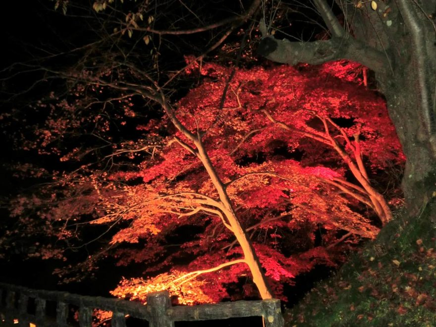弘前城菊と紅葉まつり 紅葉ライトアップ・見頃情報