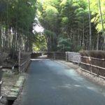 京都の穴場スポット『竹の径・洛西竹林公園』で壮大な竹林をゆく
