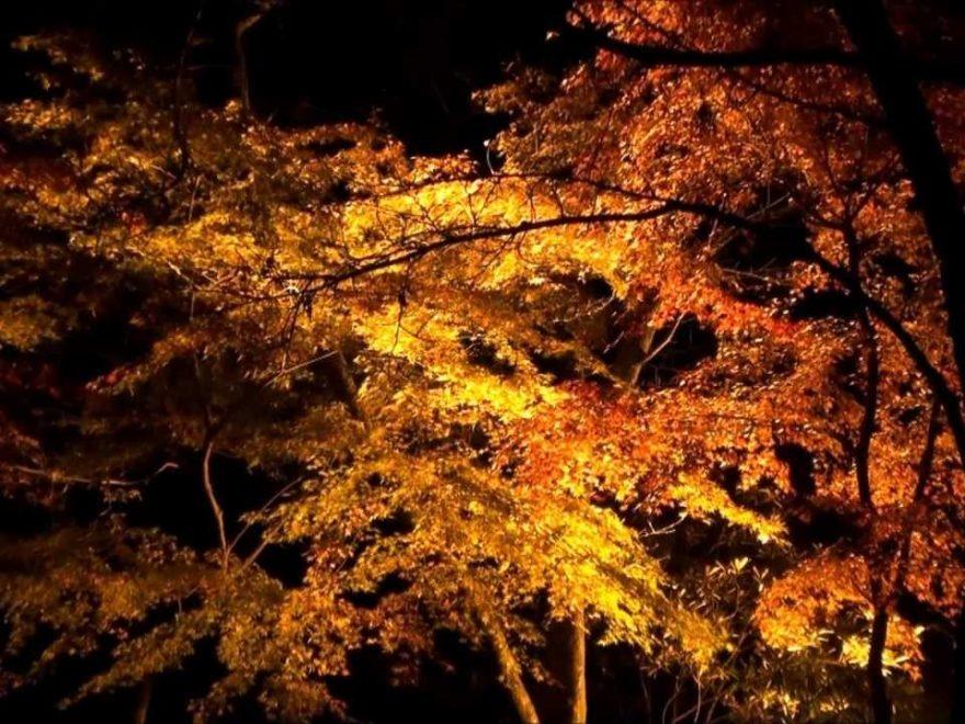 奥津渓(岡山) | 2018年紅葉ライトアップ情報