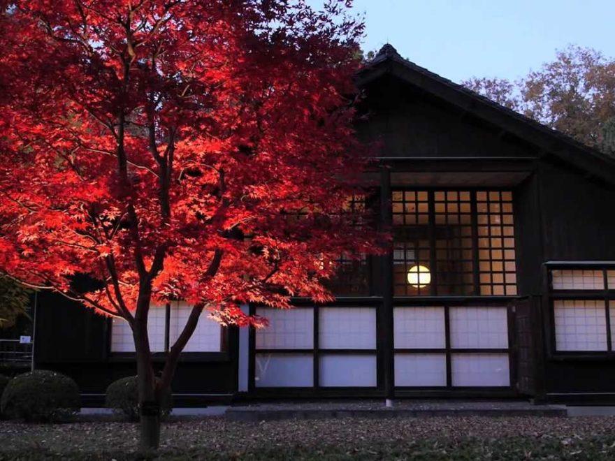 江戸たてもの園(東京) | 2018年紅葉ライトアップ情報