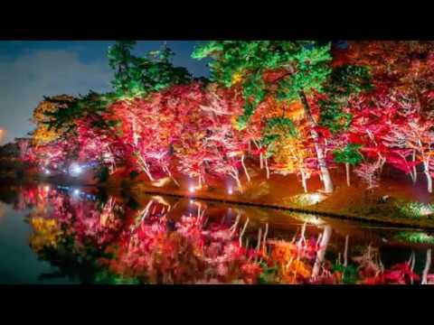 岡崎・東公園(愛知) | 2018年紅葉ライトアップ情報