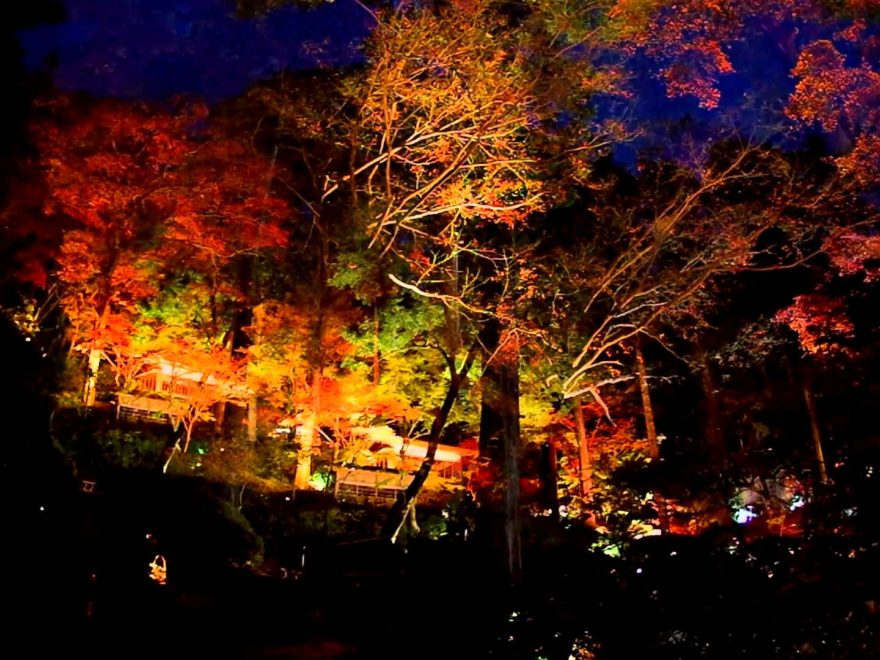 大興善寺(佐賀) | 2018年紅葉ライトアップ情報