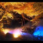 六義園(東京) | 2019年紅葉ライトアップ・見頃情報