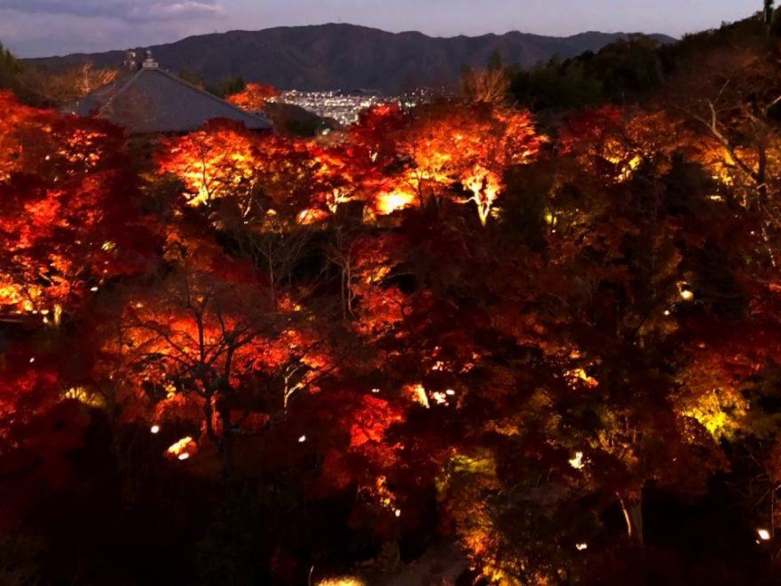 将軍塚青龍殿(京都) | 2018年紅葉ライトアップ情報