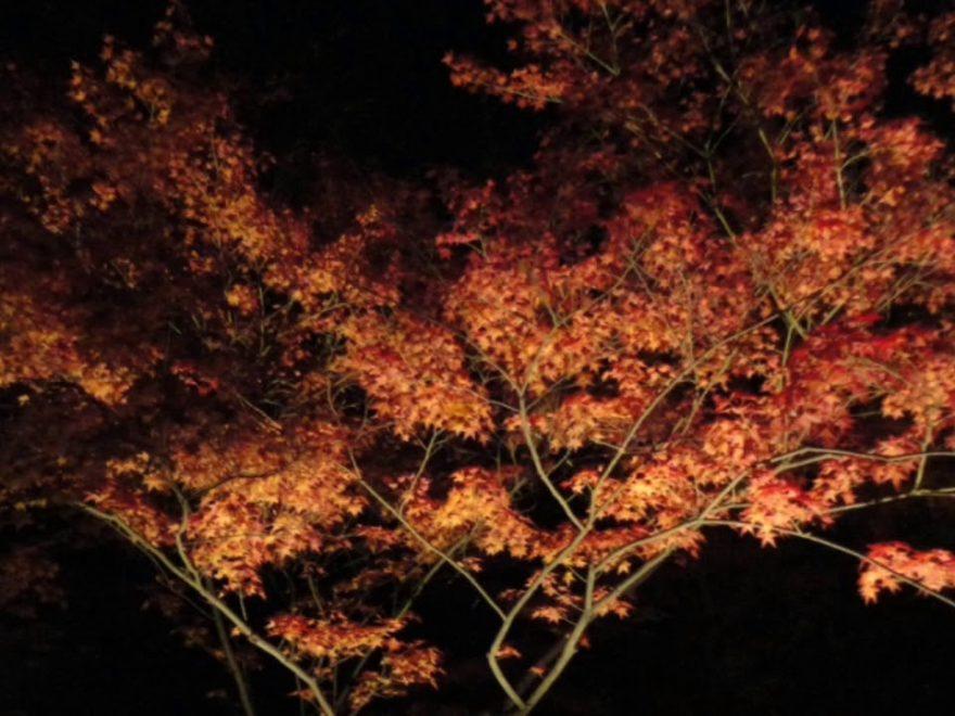 青蓮院(京都) | 2018年紅葉ライトアップ情報