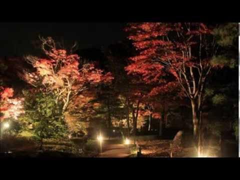 南湖公園・翠楽苑(福島) | 2018年紅葉ライトアップ情報
