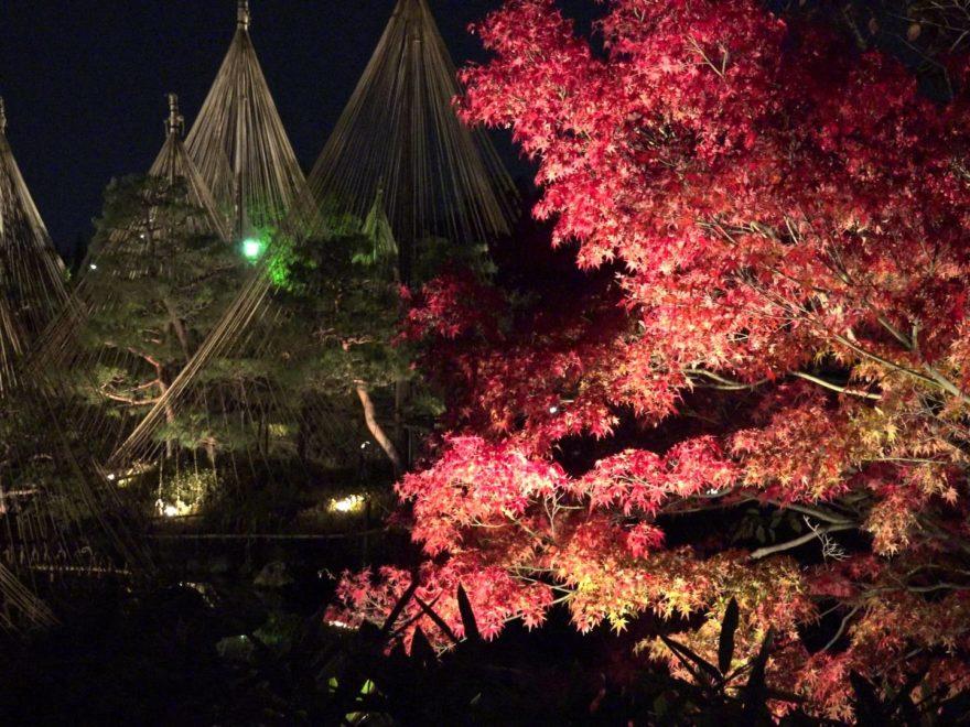 白鳥庭園(愛知) | 2018年紅葉ライトアップ情報