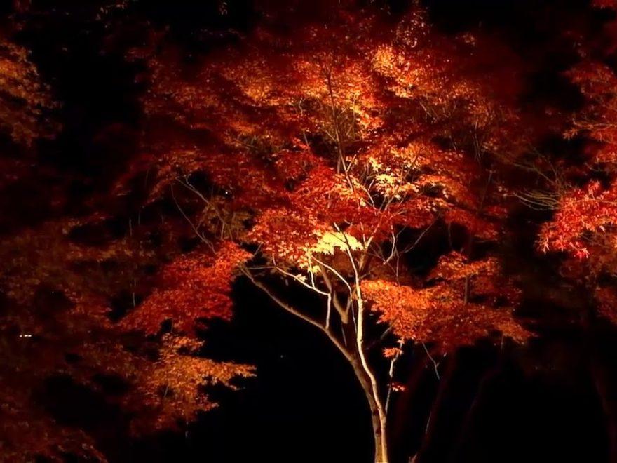 大磯城山公園(神奈川) | 2018年紅葉ライトアップ情報