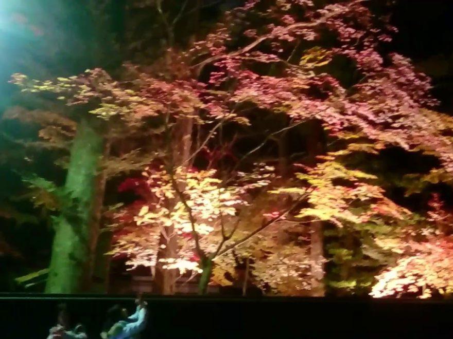 角館武家屋敷通り(秋田) | 2018年紅葉ライトアップ情報