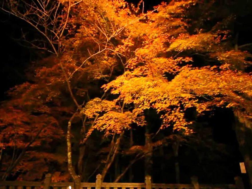 播州清水寺(兵庫) | 2018年紅葉ライトアップ情報
