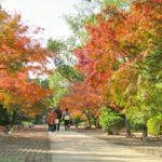 熊本城二の丸広場・旧細川刑部邸(熊本)   2020年紅葉ライトアップ・見頃情報