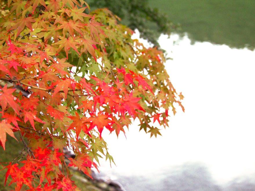 栗林公園紅葉画像