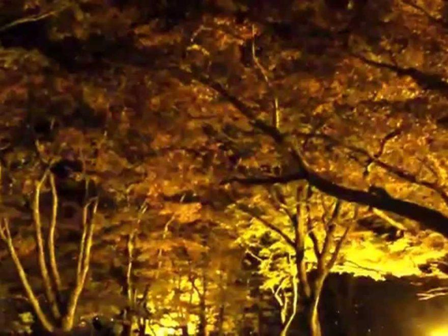 長岡市 もみじ園(新潟) | 2018年紅葉ライトアップ情報