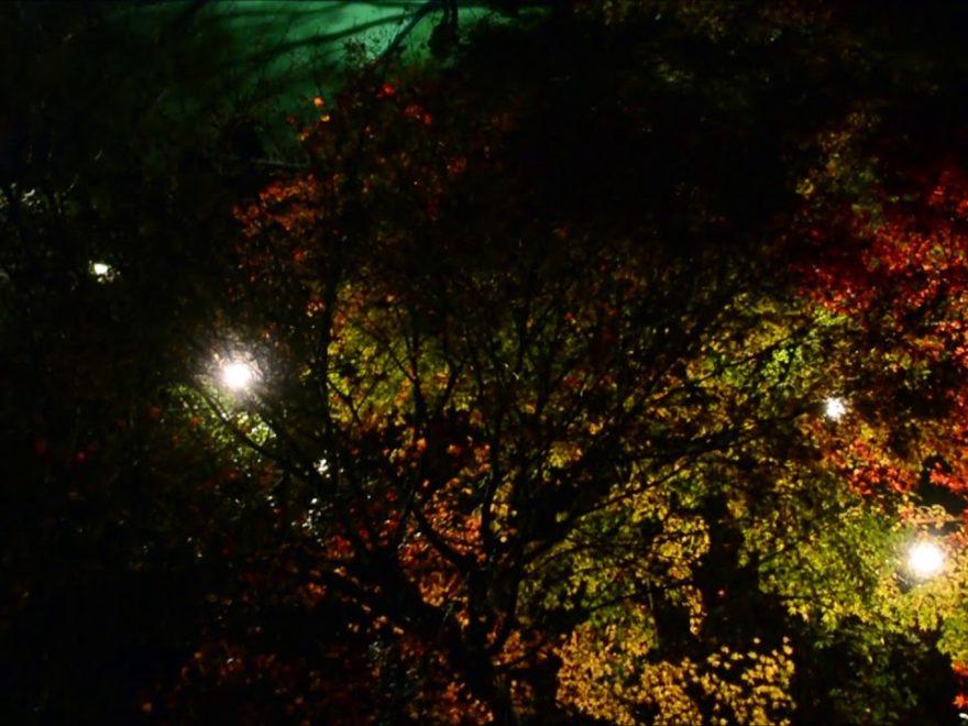 書写山 圓教寺(兵庫) | 2018年紅葉ライトアップ情報