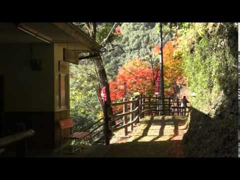 大洲市・白滝公園(愛媛) | 2018年紅葉ライトアップ情報