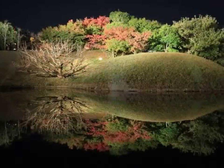 梅小路公園(京都) | 2018年紅葉ライトアップ情報